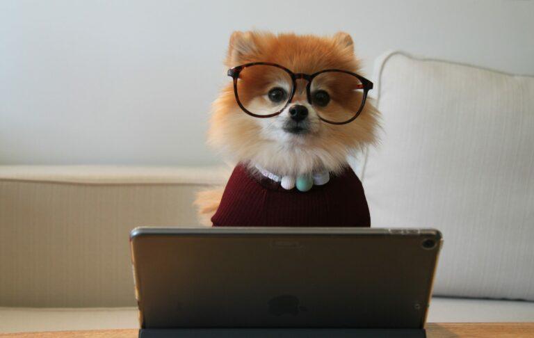 Süsser Hund sitzt vor Laptop