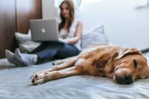 Hund liegt auf Bett daneben eine Frau mit Laptop Contentplanung