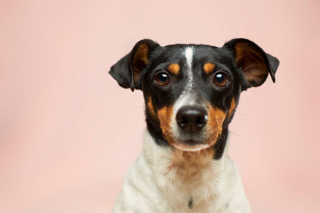 Qualität in der Tierarztpraxis